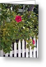 Along The Picket Fence Greeting Card