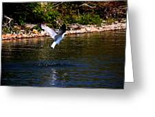 Along The Shoreline Greeting Card