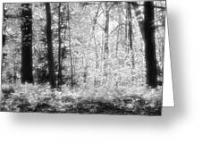 Along The Top Bw  Greeting Card