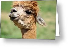 Alpaca 1 Greeting Card
