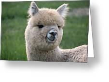Alpaca Smile Greeting Card