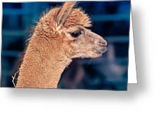 Alpaca Wants To Meet You Greeting Card