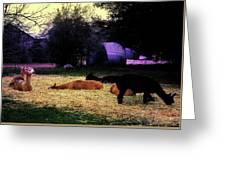Alpacan Twilight Greeting Card