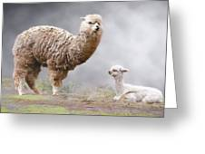 Alpacas Mum And Baby Greeting Card