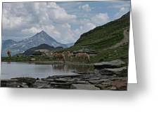 Alps' Horses Greeting Card