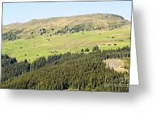 Alpine Forest Landscape.  Greeting Card