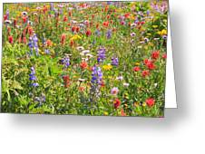 Alpine Glory In Canada Greeting Card