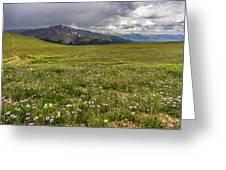Alpine Meadow Before Mount Guyot Greeting Card