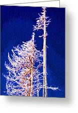 Alpine Snowy Trees 2 Pddbae2 Greeting Card
