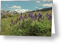 Alpine Spring Greeting Card