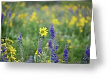 Alpine Sunflower Greeting Card