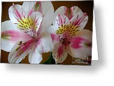 Alstroemerias - Heralding Greeting Card
