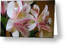 Alstroemerias - Listening Greeting Card
