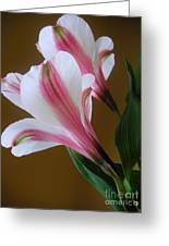 Alstroemerias - Together Greeting Card