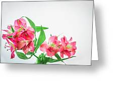 Alstromeria 1 2017 Greeting Card