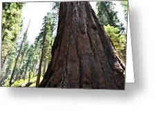 Alta Vista Giant Sequoia Greeting Card