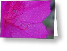 Althea Greeting Card