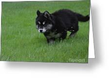 Alusky Puppy Creeping Through Green Grass Greeting Card