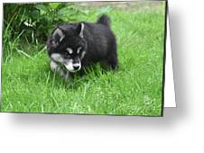 Alusky Puppy Dog Spotting A Toy To Play With Greeting Card