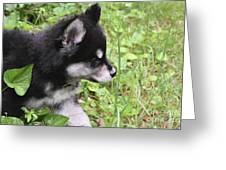 Alusky Puppy Tip Toeing Through Green Foliage Greeting Card