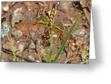 Amanda's Pennant Dragonfly Female Greeting Card