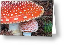 Amanita Muscaria - Red Mushroom Greeting Card