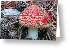 Amanita Mushroom Greeting Card by Michele Penner