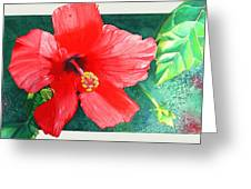 Amapola Greeting Card