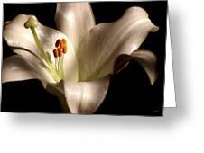 Amarillis Greeting Card