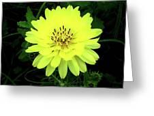 Amarillo Greeting Card