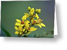 Amarillo En Verde Greeting Card