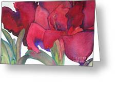 Amaryllis 3 Greeting Card