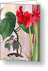 Amaryllis And Begonia Greeting Card