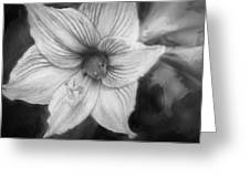 Amaryllis And Tree Frog Painted Bw Greeting Card