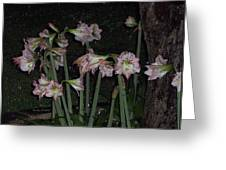 Amaryllis At Night After A Rain Greeting Card