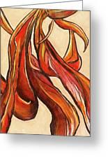 Amaryllis Bulb Greeting Card