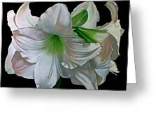 Amaryllis Greeting Card by Doug Strickland