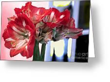 Amaryllis Fantasy Greeting Card