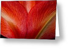 Amaryllis Flower Petals Greeting Card