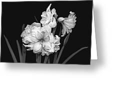 Amaryllis In Black And White Greeting Card