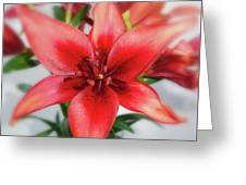 Amaryllis In Fading Greeting Card