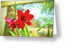 Amaryllis On  The Porch Greeting Card