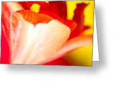 Amaryllis Shadow Abstract Flower With Shadow On Red And Yellow Greeting Card
