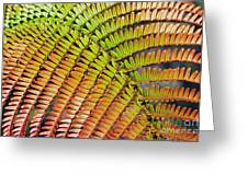 Amaumau Fern Frond Greeting Card