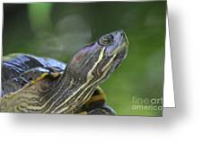 Amazing Close-up Painted Turtle Resting Greeting Card