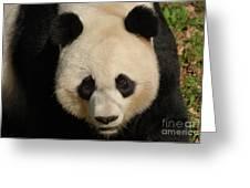 Amazing Face Of A Beautiful Giant Panda Bear Greeting Card