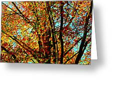 Amazing Fall Foliage Greeting Card