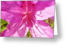 Amazing February 2017 Pink Azalea Greeting Card
