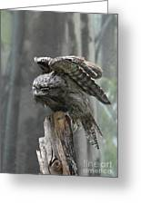 Amazing Frogmouth Bird With His Wings Extended Greeting Card
