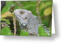 Amazing Gray Iguana Sitting In The Top Of A Bush Greeting Card
